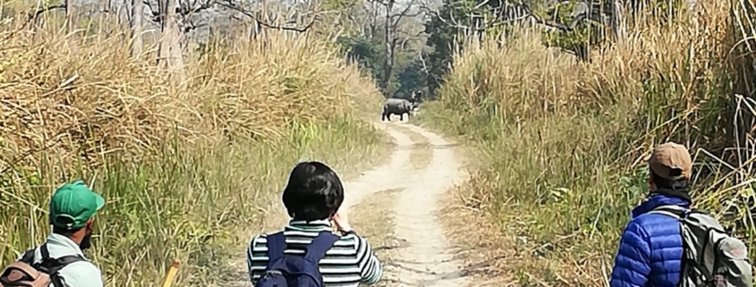 nepal chitwan jungle walk rhino